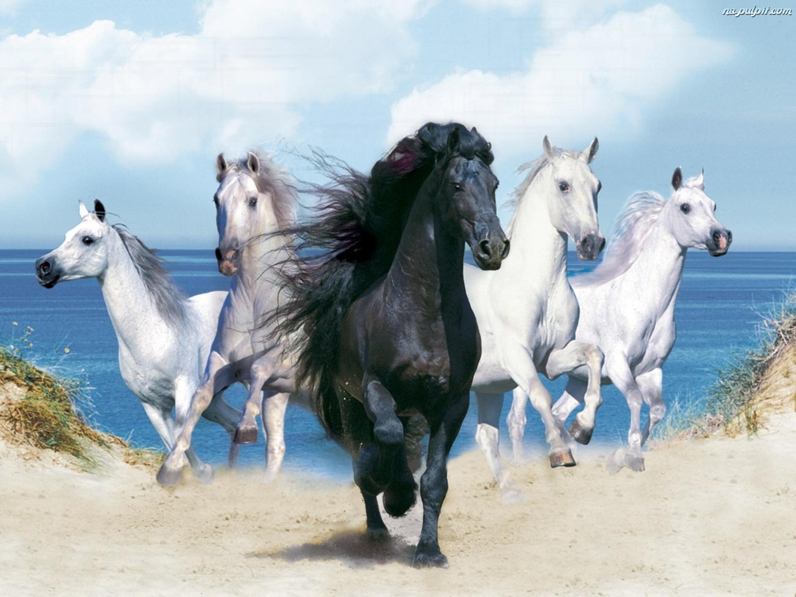 Pla  A  P  Dz  Ce  Konie